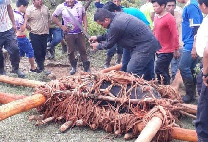 Territorio indígena de Salitre realizará su tradicional Jala de Piedra